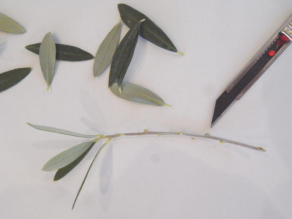 葉をカット